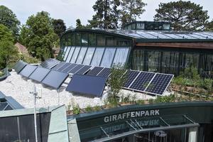 жирафы и солнечная энергия