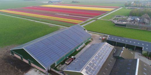 Pfalzsolar_Dach_photovoltaik_Dachanlage_niederlande_blumen