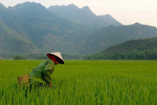 Vietnam_flickr_M_M_750