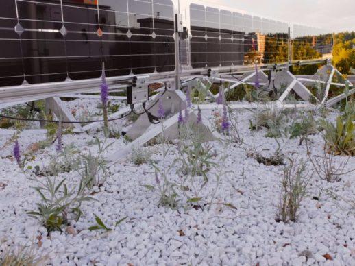 photovoltaik_unterkonstruktion_dach_solarspar_pflanzen-768x576