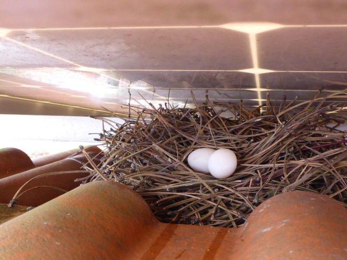 не давайте голубям гнездиться под солнечными батареями