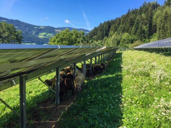 eco-tec.at_Photovoltaik-Blumenwiese-800x599