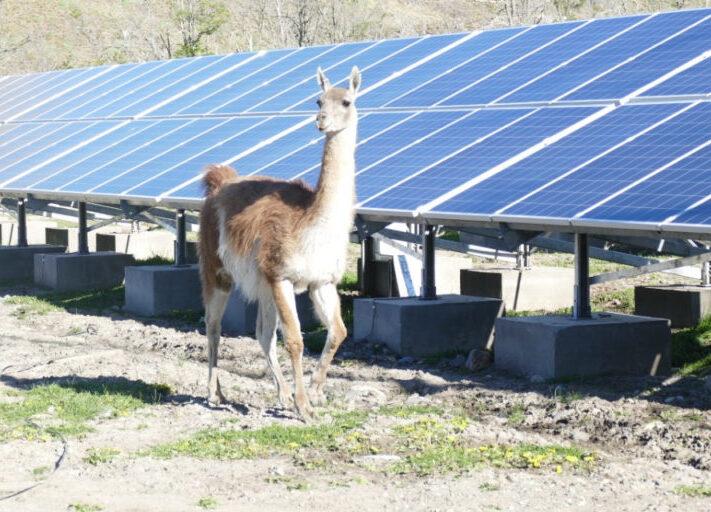 Tesvolt_Patagonien_Lama_Wasser-Photovoltaik-Specher-Anlage_2020-1024x512