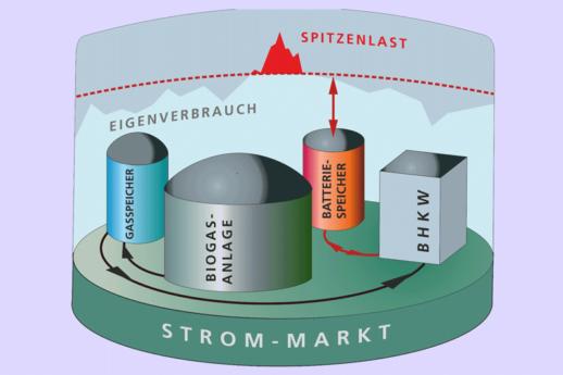 Fraunhofer_IEE_U_Werner-Bio_800